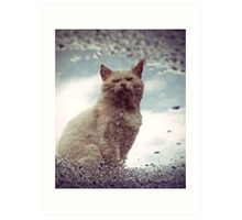 Reflections of Mankey (Street Cat) Art Print