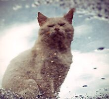 Reflections of Mankey (Street Cat) by Andrew Holford