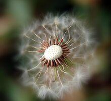 Exposed Wish © Vicki Ferrari by Vicki Ferrari