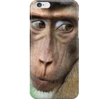Watching Carefully. Pig-tailed Macaque Portrait. Borneo.  iPhone Case/Skin