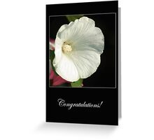 Fragile unfolding - Congratulations - card Greeting Card