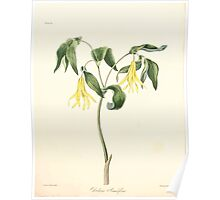 Floral illustrations of the seasons Margarate Lace Roscoe 1829 0224 Uvularia Grandiflora Poster
