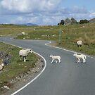 Right of way on Skye by BronReid