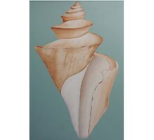Japanese Wonder Shell Photographic Print