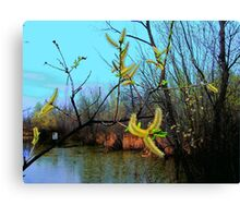 The Catkins Canvas Print