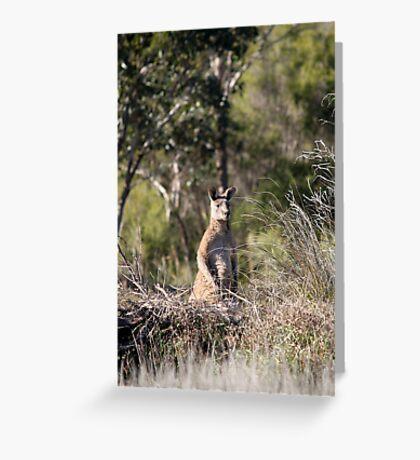 Eastern Grey Kangaroo Greeting Card