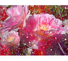 Lovely Tulips & Pink. Photographic Print