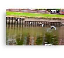 Formation Flight on the River Ouse - York Canvas Print