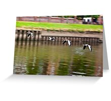 Formation Flight on the River Ouse - York Greeting Card