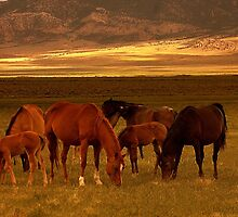 Heavenly Foals by Jeanne  Nations