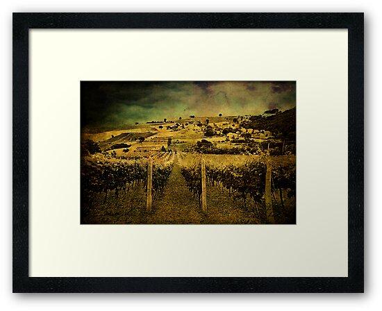 Zio's Vineyard by Angie Muccillo