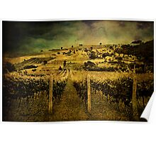 Zio's Vineyard Poster
