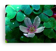 Blink and You'll Miss It Canvas Print