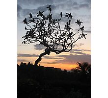 Silhouette Overlooking Florence Photographic Print