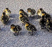 Fluff balls (Ducklings) by Karen  Betts