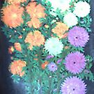 PICT0155Chrysanthemum by Lilykoli