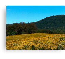 Goldenrods Versus Hills Versus Sky Canvas Print
