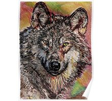Portrait of a Gray Wolf Poster