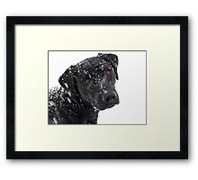 Black Lab Paying in the Snow Framed Print