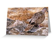 Ring necked dove on a wall... Greeting Card