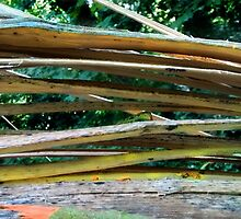 Cracking Branch  by poppyflower