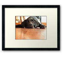 Dog Days of Summer! Framed Print