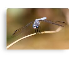 Gaze of the Blue Dasher Canvas Print
