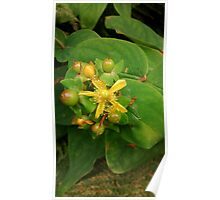 Wild yellow flower Poster