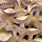 Mushrooms Delicate by AlbertStewart