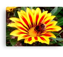 Bumble Bee in a Flower Canvas Print