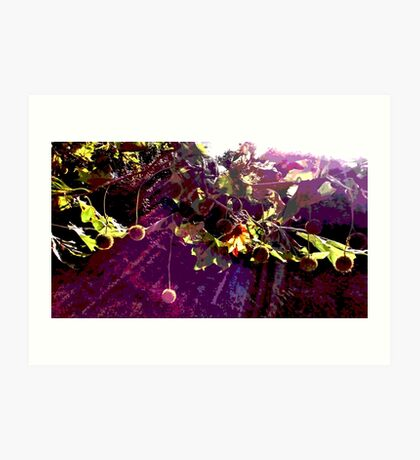Sycamore tree Art Print