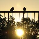 Sun Birds by AlbertStewart