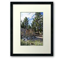 Petrified Redwood  Framed Print