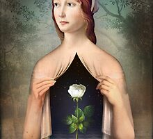 The Rose by ChristianSchloe