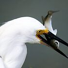 Egret with Fish by Paulette1021