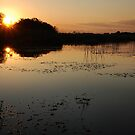 Okavango Delta Sunset - Botswana by Sharon Bishop