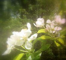 apple blossoms #2 by Dawna Morton