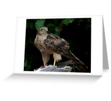 Sparrowhawk With Kill Greeting Card