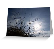 Grasses on the Beach at Croyde Greeting Card