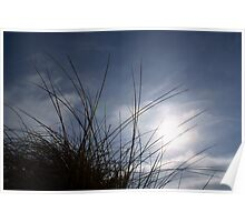 Grasses on the Beach at Croyde Poster