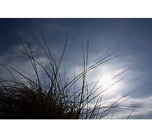 Grasses on the Beach at Croyde Photographic Print