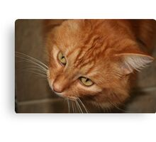 Orange Tabby Looking Up Canvas Print