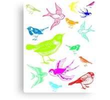 Brightly coloured birds Canvas Print
