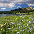 Greens & Blues Are The Colors I Choose by Gene Praag