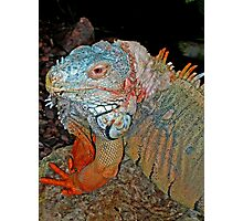 Tropical Iguana Photographic Print
