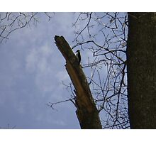 Woody the Wood Pecker Photographic Print