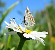 Butterfly and Daisy by ienemien