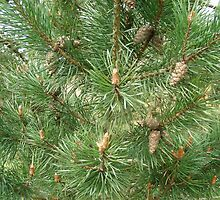 Fir tree with cones by brittle1906