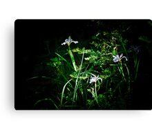 Wild Irises Canvas Print