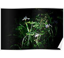 Wild Irises Poster